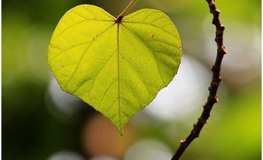 Je kunt alleen vreugde beleven door trouw te blijven                                  aan de waarheid in je eigen hart